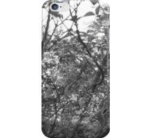B&W: Magic hour trees iPhone Case/Skin