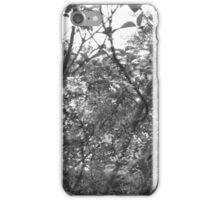 B&W: Magic hour trees iPhone Case/Skin