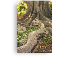 The long and winding root Canvas Print