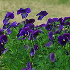 Purple by alamarmie