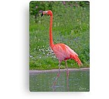 Caribbean Flamingo! Canvas Print