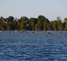 Egrets In The Swamp by WildestArt