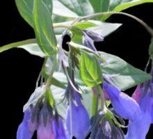 Blue Wild Mountain Flowers Sticker