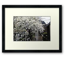 Cherry Blossom - Japan Framed Print