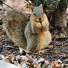 Squeeeee! Squirrel! by Keala