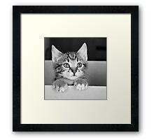 Kitten in a box 2 (non-clothing products) Framed Print