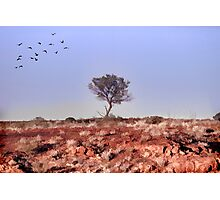 Lone Tree, Outback Australia. Photographic Print