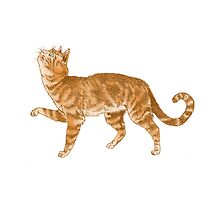Ginger Cat Looking Up - Illustrated Design by Catie Atkinson
