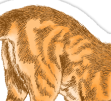 Ginger Cat Looking Down - Illustrated Design Sticker