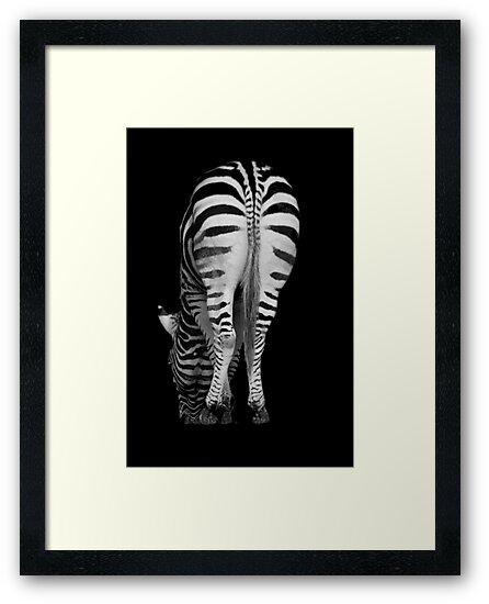 Stripes by Julie Thomas