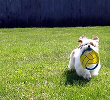 Time For a Game of Fetch! by Righteous Zombie Photography