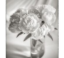 Peony Roses by Mieke Boynton