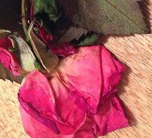 Drying rose by HummingbirdJazz