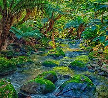 St Columba Falls State Reserve by Paul Amyes