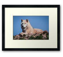 Arctic wolf Framed Print