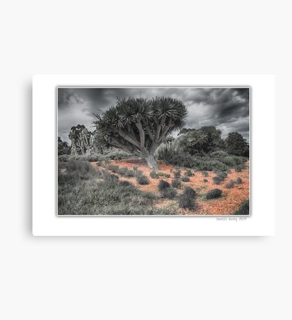 Urban Desert Canvas Print