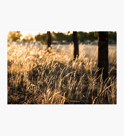 Nature's Most Precious Gift Photographic Print
