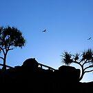 The  Birds by Noel Elliot