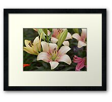 Spotted lilly at the RHS Chelsea Flower Show Framed Print
