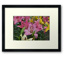 Pink Lillies at the RHS Chelsea Flower Show Framed Print