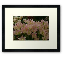 Tulips at the RHS Chelsea Flower Show Framed Print