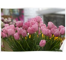 Pink tulips at the RHS Chelsea Flower Show Poster
