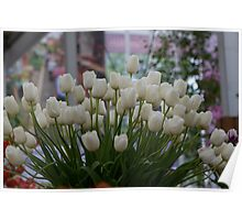 White tulips at the RHS Chelsea Flower Show Poster
