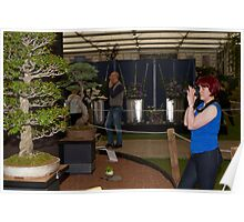 Bonsai trees at RHS Chelsea Flower Show Poster