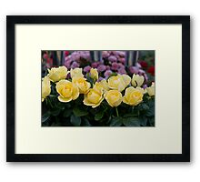 Yellow roses at RHS Chelsea Flower Show Framed Print