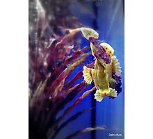 frogfish portrait for Mandy Photographic Print