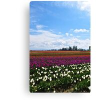 Long Tulips Canvas Print