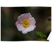Pretty Blossom Poster