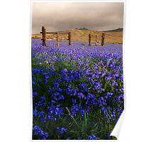 Dartmoor 'Belle Poster
