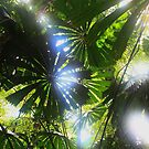 Paterns in the canopy - Umbrella palms Daintree by john  Lenagan