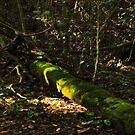 Fallen tree covered with a blanket of moss (please view larger) by myraj