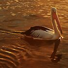 Golden Pelican by myraj