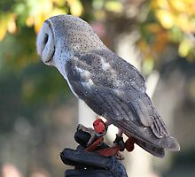 500 Gram Owl by Vicki Childs