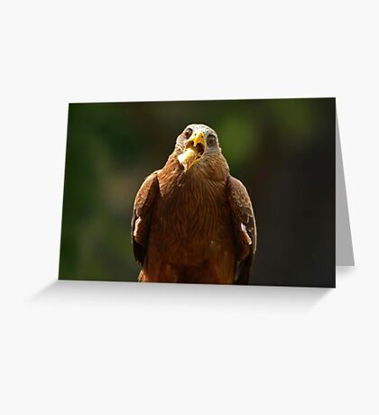 Hawk Eating Chicken Greeting Card