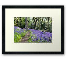 Spring Bluebells Framed Print
