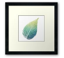 Single Blue Green Yellow Leaf Framed Print