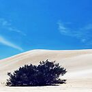 White sand, blue sky and a tree by myraj