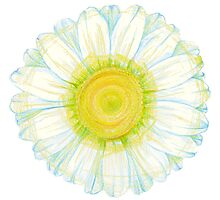 camomile flower Photographic Print