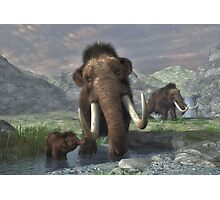 Woolly Mammoth  Photographic Print