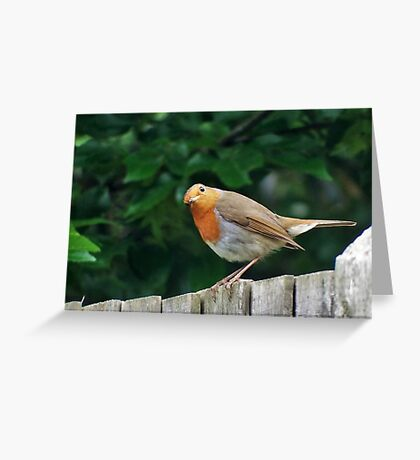 Good Morning Mr. Robin ! Greeting Card