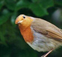 Good Morning Mr. Robin ! Sticker
