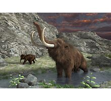 Woolly Mammoth 2 Photographic Print