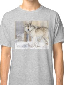 Stare - Timber Wolf Classic T-Shirt