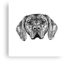 Pointer Dog Ink Drawing Canvas Print