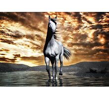 Beautiful Horse 2  Photographic Print