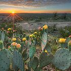 Texas Hill Country Images - Prickly Pear Cactus at Sunset 1 by RobGreebonPhoto